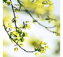 Once upon a spring Photographic Print