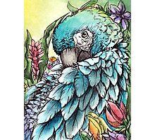 'Jungle Beauty'- Onyx Art Studios Photographic Print