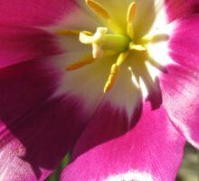 Purple Tulip Macro Sticker