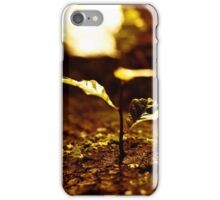 Oak shoot, Hobart, Tasmania iPhone Case/Skin