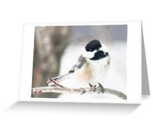 Black Capped Chickadee - Birds - Photograph Greeting Card