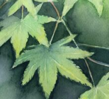 Japanese Maple Watercolor Painting Sticker