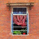 Double Happiness Window  by Ethna Gillespie