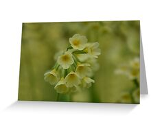 Primulas in the Spring Greeting Card