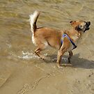 Little Dog and Water by ienemien