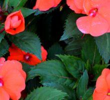 Red orange flowers in the green bush. Sticker