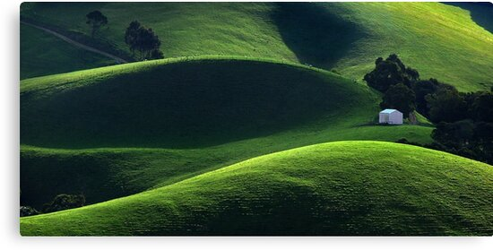 Light and Shade - Gippsland by Hans Kawitzki
