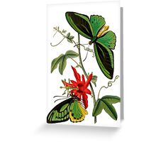 FF - Butterfly-5 Greeting Card