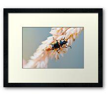 macro bug Framed Print