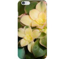 Succulent Marvel iPhone Case/Skin