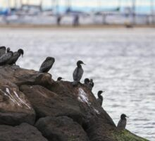 Cormorants on the rocks at Brighton Sticker