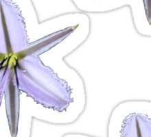 Fringed Lily Sticker