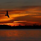 Red sky flight - Seagull by Jim Cumming