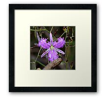 Fringed Lily Framed Print