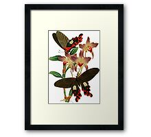 FF - Butterfly-6 Framed Print