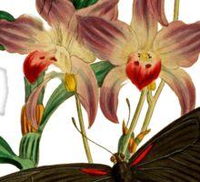FF - Butterfly-6 Sticker