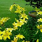 Sunshine in the Garden - Yellow Lilies and Birdbath by MotherNature