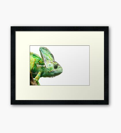 Exotic Reptile Framed Print