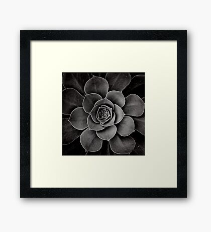 levels of plant Framed Print