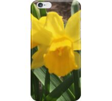 Baby Daffodil  iPhone Case/Skin