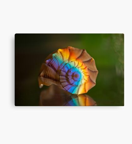 Little Shell of Great Worth Canvas Print