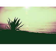 Palm tree at the beach Photographic Print