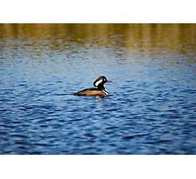 Hooded Merganser Drake Photographic Print
