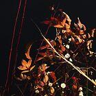 Dried Flower Arrangement by RVogler