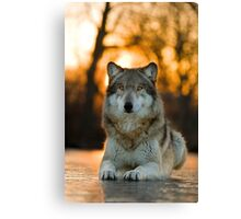 Beautiful Wolf Canvas Print