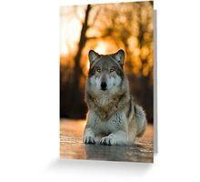 Beautiful Wolf Greeting Card