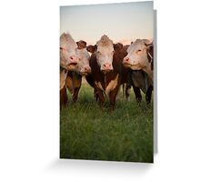 Cow Clan. Tucson, Arizona, USA. Greeting Card