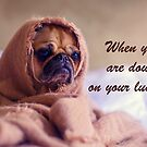 Pug Dog down on his Luck Wrapped in a sack, Humor by Mary Taylor