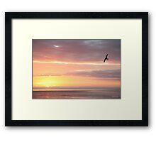 Galapagos Perfection - Limited Edition Print 1/10 Framed Print