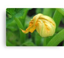 Zucchini flower Canvas Print