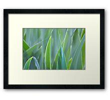 leafy monochrome Framed Print