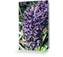 Midnight Mystique - Dark Hyacinth Greeting Card