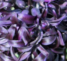 Midnight Mystique - Dark Hyacinth Sticker