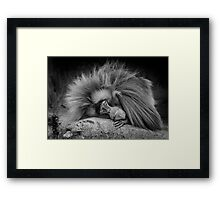 Eighties Hair Band Monkey after the groupies have left. Framed Print