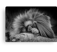Eighties Hair Band Monkey after the groupies have left. Canvas Print