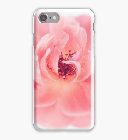 Peach Wild Garden Rose Isolated on White iPhone Case/Skin