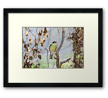 figbird on tree branch Framed Print