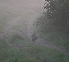 Rabbits in Morning Haze by patjila