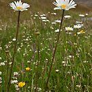 Roadside Flowers by Werner Padarin