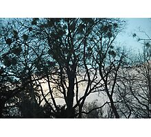 Vienna Trees Photographic Print