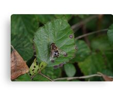 Hoverfly Canvas Print
