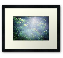 Springtime in Wales Framed Print