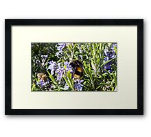 Busy Bees on Rosemary Flowers Framed Print