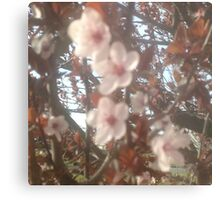 Spring Pink Blossoms Metal Print