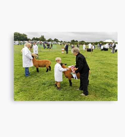 Agricultural Show sheep competition Canvas Print