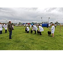 Sheep judging, Gillingham & Shaftesbury Show Photographic Print